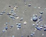 Scattered Beach Stones