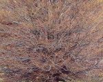 Dynamic Beech Tree