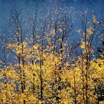 Autumn Aspens & Blue Lake Stars
