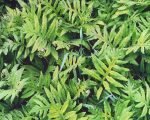 Emerald Ferns and Raindrops