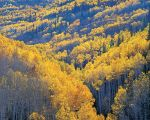Sunlit Aspen Mountain Valley