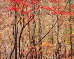 Bold Autumn Forest