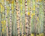 Trout Creek Aspen Forest
