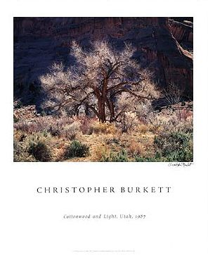 Cottonwood and Light Poster