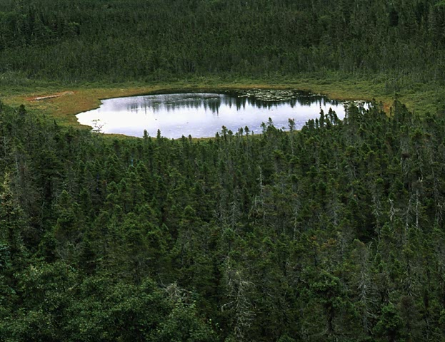 Black Spruce Forest and Pond