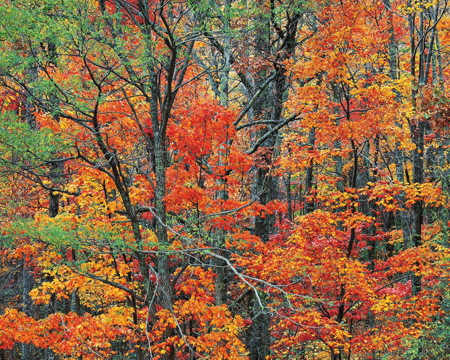 Cherokee Autumn Forest