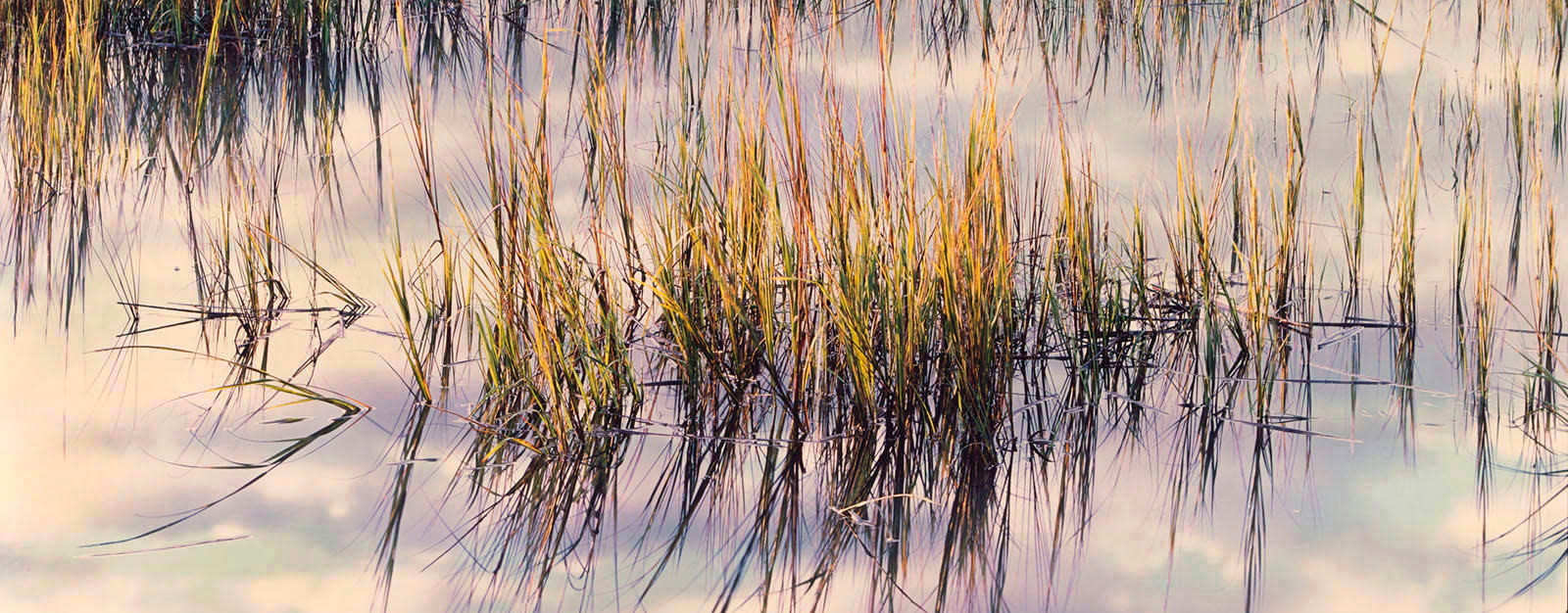 Marsh Grass at Sunrise