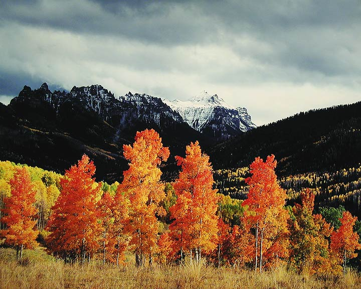Orange Aspens, Owl Creek Pass