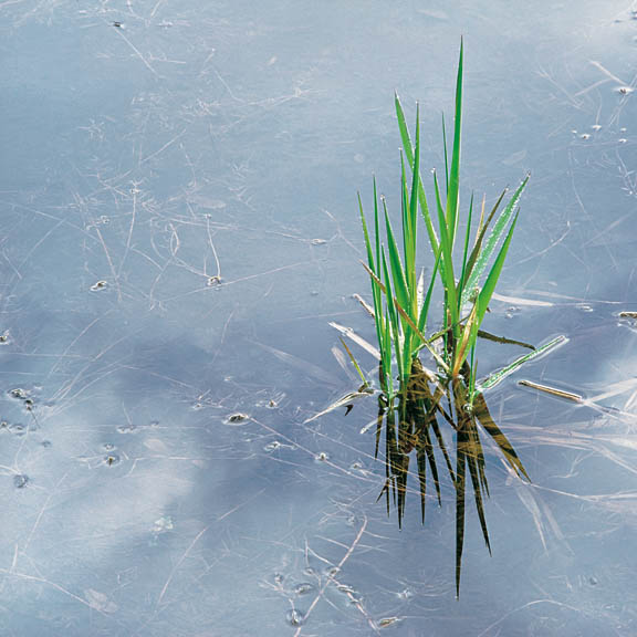 Spring Grass and Rainpool